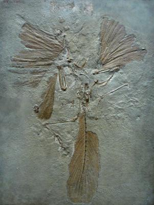 archaeopteryx_lithographica_paris.jpg